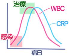 白血球とCRPの関係イメージ