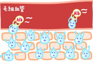 第3回 栄養状態を表すTP・Alb