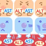 第6回 肝細胞傷害の指標 ASTとALT